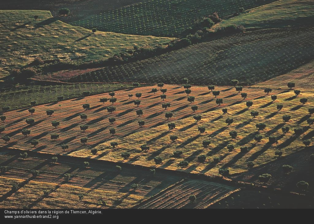 algerie-vue-du-ciel215.jpg