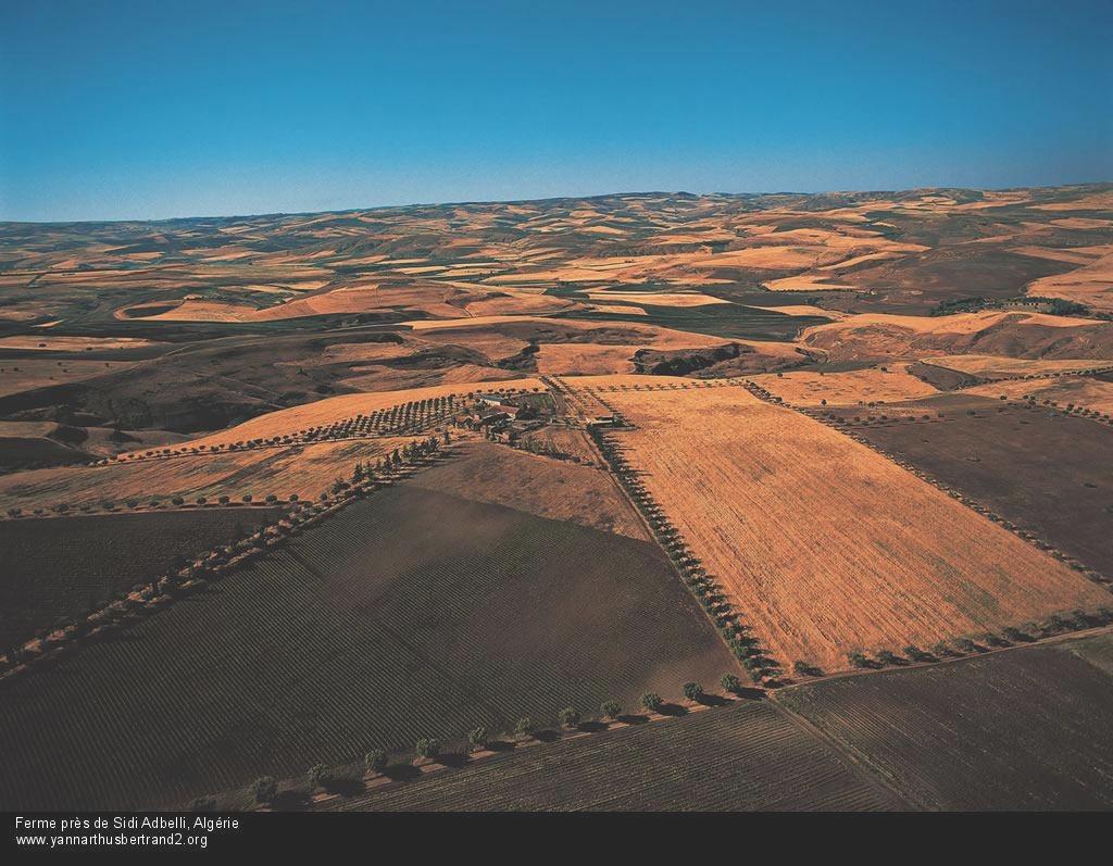 algerie-vue-du-ciel221.jpg