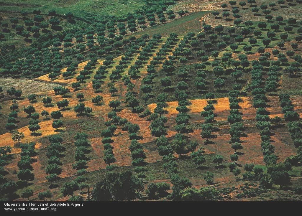algerie-vue-du-ciel225.jpg
