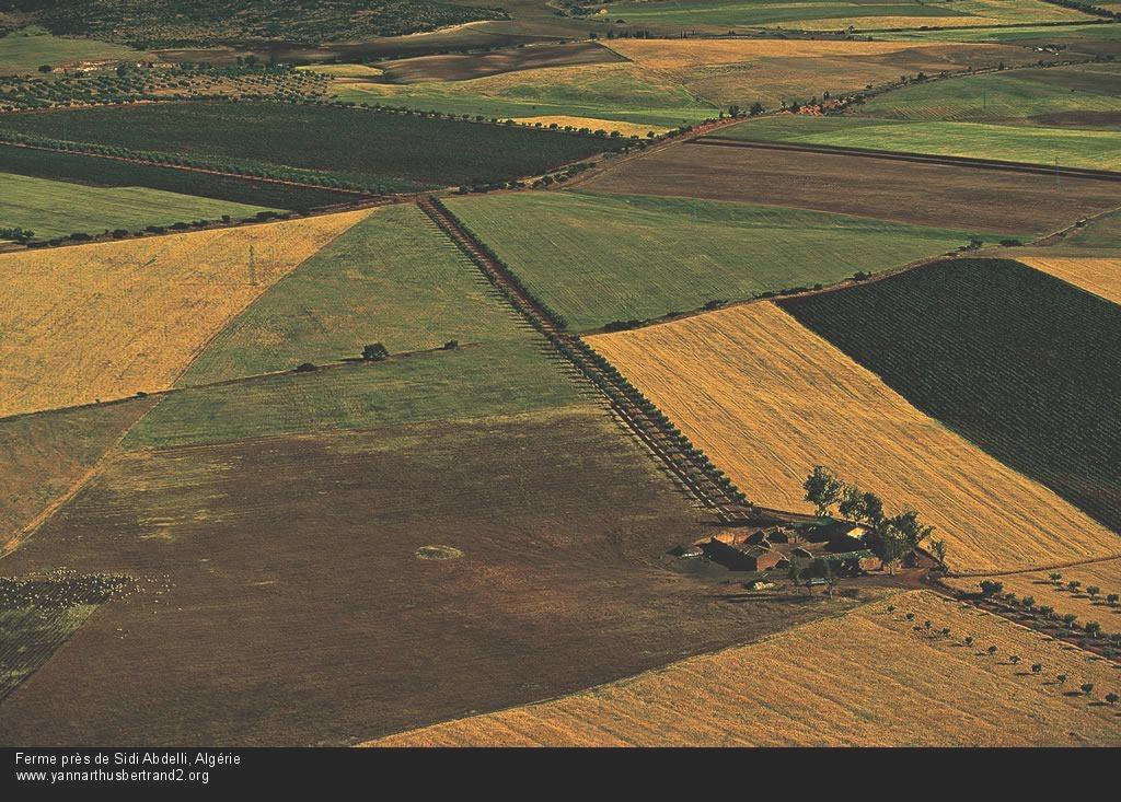 algerie-vue-du-ciel233.jpg